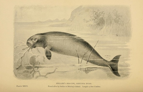 Extinct monsters. London :Chapman & Hall,1896. http://www.biodiversitylibrary.org/item/51560